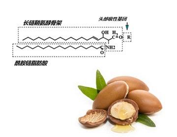 全缘叶澳洲坚果籽油_上海博烁实业有限公司